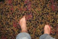 Fiesta del vino y de vendimia a la antigua en Tarragona