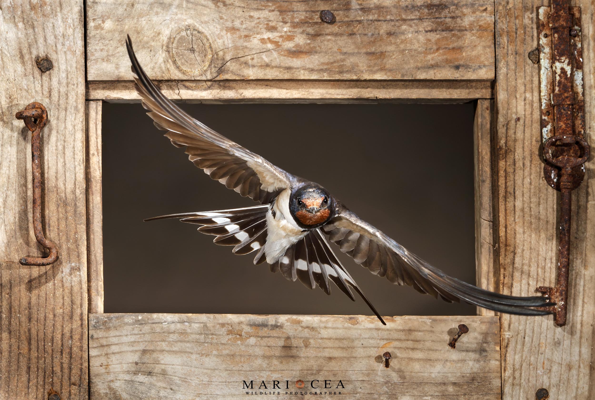 Fotografías de naturaleza tomadas por Mario Cea
