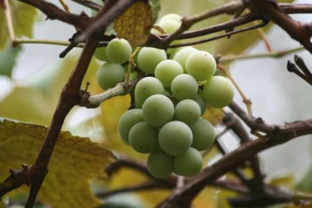 Algunas razones por las que debes de incluir más uvas en tu dieta