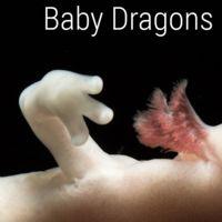 """Se fotografía por primera vez a un """"bebé dragón"""""""