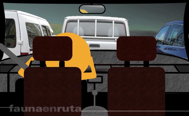 fauna en ruta: Atasco de tráfico