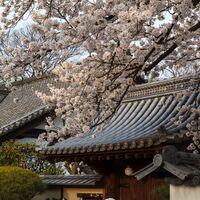 Experimenta la ruta japonesa del Cerezo en Flor sin salir de nuestras fronteras