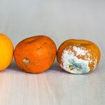 Qué es el moho, por qué aparece en nuestros alimentos y cuándo puede ser peligroso para la salud