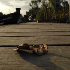 Foto 30 de 38 de la galería fotos-hechas-con-el-huawei-nova-plus en Xataka