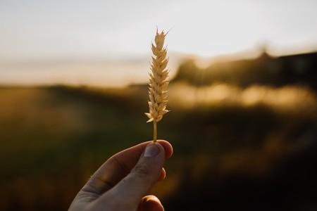 Cada vez más gente que no es celíaca está eligiendo alimentos sin gluten: un debate entre nutrición, creencias y ciencia