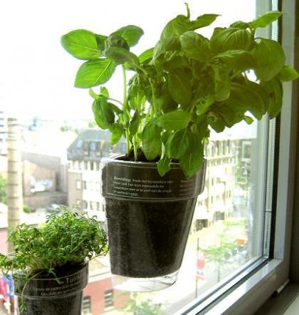 Windowherbs, tus hierbas aromáticas en la ventana