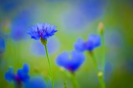 Flor11