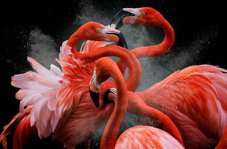 Estas son las mejores fotografías de aves según el concurso internacional 'Bird Photographer of the Year 2018'