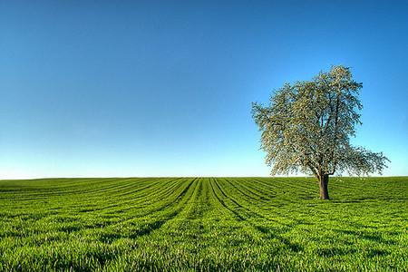 Intenta ser un fotógrafo ecológico