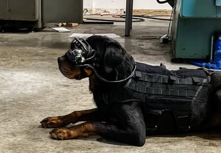 El ejército de Estados Unidos está probando unas nuevas gafas de realidad aumentada... para perros