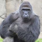 Dejemos de culpar a la madre del niño por la muerte del gorila Harambe
