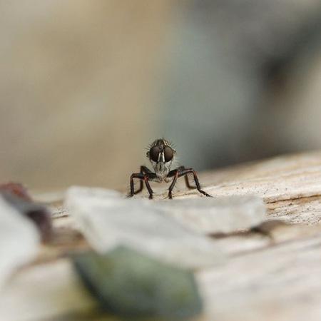 fotografias-de-insectos-19.jpg