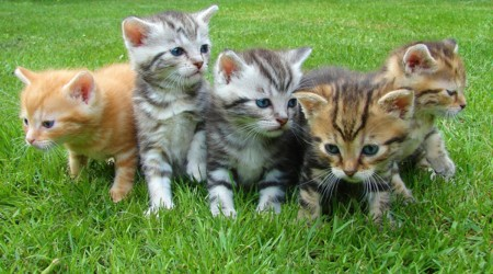 Kittens 555822 1280