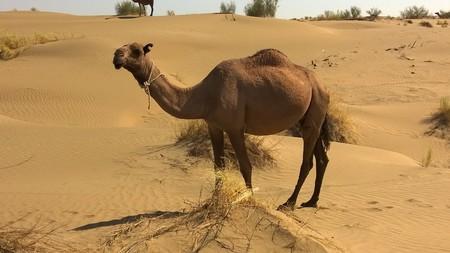 Camel 900390 1280