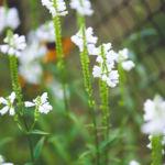 Sanidad prohibe la Crema de Plantas B.A. por contener corticoides no declarados