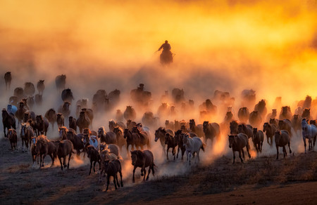 Hundred of horses are galloping when the sun is about to shine its last ray. It is traditionally said that a Mongol without a horse is like a bird without a wing, this is how strong the bond between human being and animal that we should appreciate.  Copyright: © Tien Sang Kok, Malaysia, Winner, National Awards, 2020 Sony World Photography Awards