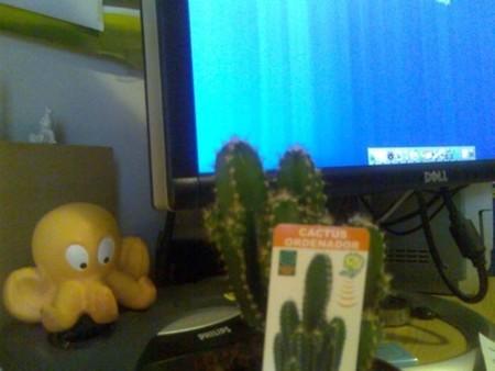 ¿Sirve de algo poner un cactus cerca de nuestro ordenador?