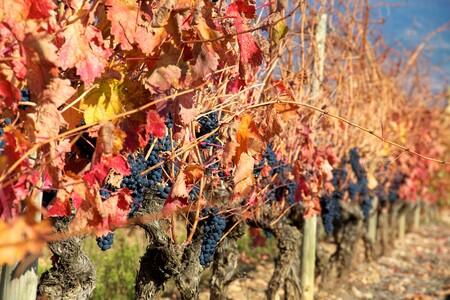 Citas para fotografiar el otoño: los viñedos de La Rioja Alta