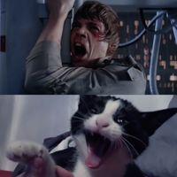 Vídeos que demuestran que los gatos tienen todo el talento para ser actores de cine
