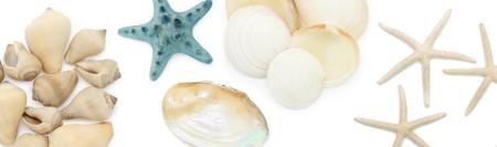 Caracolas Conchas Y Estrellas De Mar Jpg