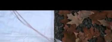 [Vídeo] Un robot que se camufla como un pulpo y brilla como una luciérnaga