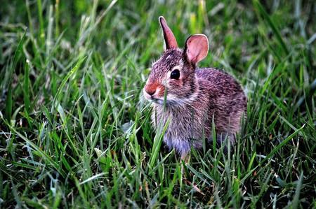 Bunny 183301 960 720