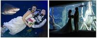Mallorca: bodas bajo el agua y rodeados de tiburones