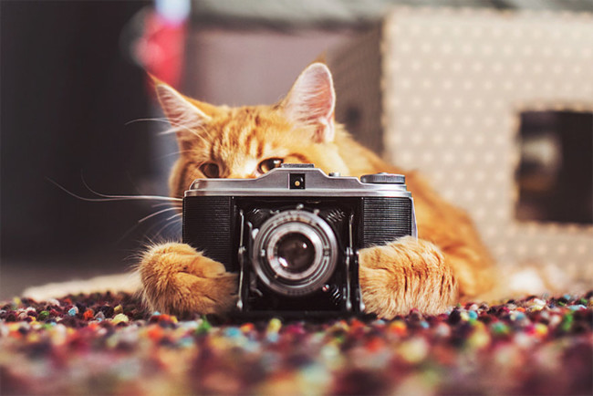 Ginger Cat Photography Kotleta Cutlet Kristina Makeeva Hobopeeba 1