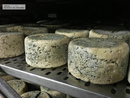 ¿Cómo se elabora un queso de Cabrales? Mitos y verdades sobre el más famoso queso asturiano