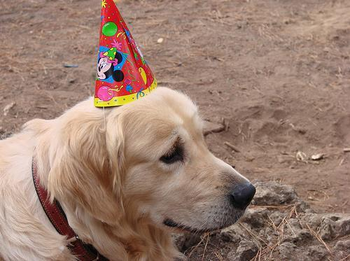 Celebracióndecumpleañosdeniñosmayorcitos