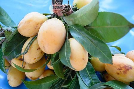 Beneficios Del Mango Para Tu Salud Mexico Arbol
