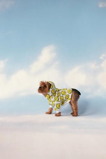 Zara Pet Smiley Collection 04