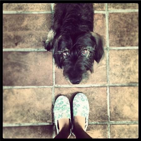 Las hay enamoradas de su perro, y luego está lo de Blanca Suárez