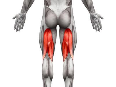 Estructura y localización de la musculatura isquiotibial