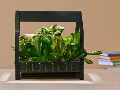 Con el nuevo invento de Ikea podrás cultivar lechugas en tu salón