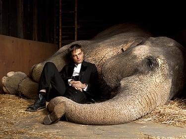 Robert Pattison se rodea de trompas en su nueva película