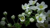 [Vídeo] TimeLapse del crecimiento de las plantas