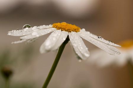 Fotografiando Bajo La Lluvia 12