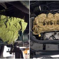 Parece cine gore, pero este es el asqueroso resultado de echar líquido de los limpias en el motor de tu coche