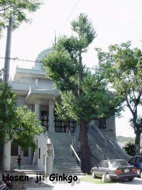 Hosen-Ji: el árbol que sobrevivió la bomba atómica de Hiroshima