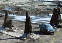 Un bosque de ocho millones de años