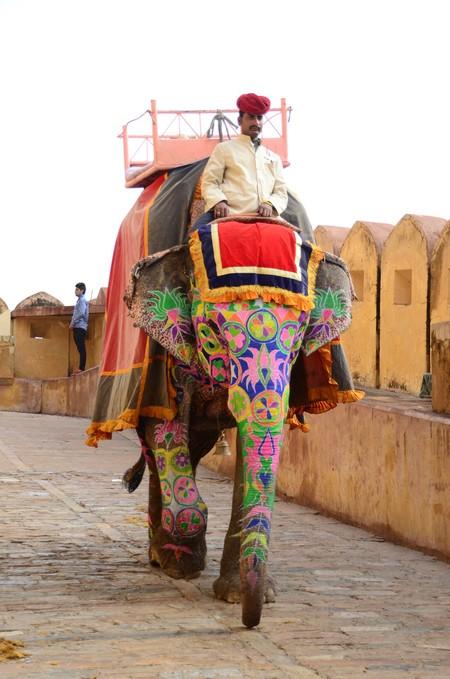 Elefantes Crueldad Turistas