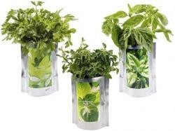 Hierbas aromáticas cultivadas en bolsitas