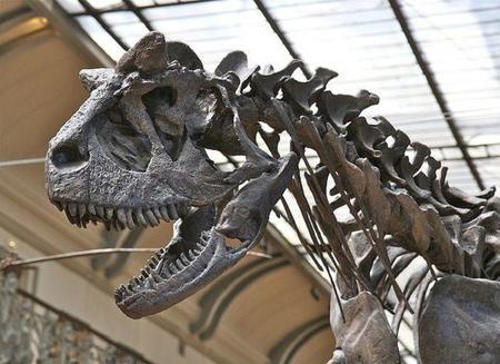 Los primeros dinosauros podrían haber tenido plumas
