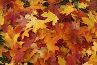 La ruta de los colores del otoño