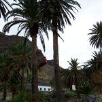 La encrucijada de la miel de palma: el edulcorante natural de La Gomera busca expandirse, pero faltan guaraperos (los arriesgados trepa árboles de las islas)