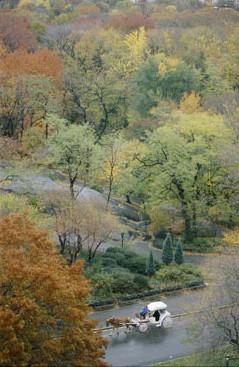 Los carruajes a caballos de Central Park, a debate