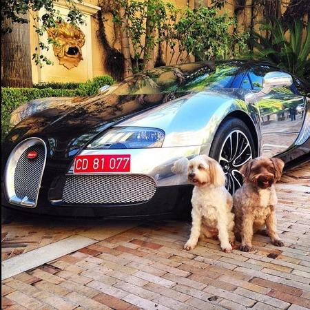 Supercarpups Bugatti Veyron