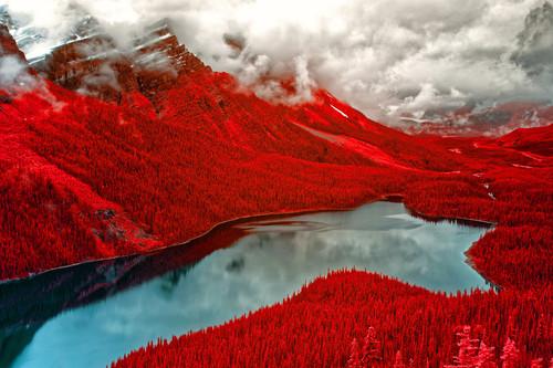 Estas son las mejores fotografías infrarrojas del momento según el Life in Another Light Photo Contest