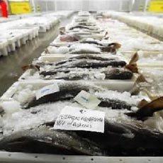 Sin problemas ante el pescado congelado